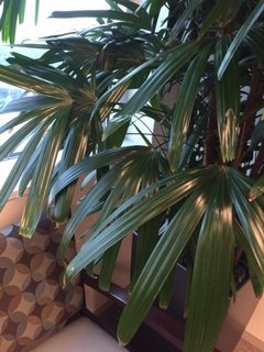 q what is the name of this plant tree , gardening, plant id