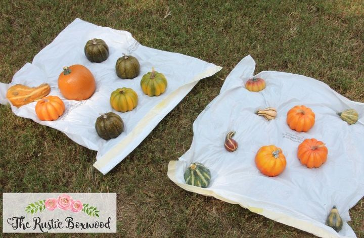 spray painted pumpkins, crafts, seasonal holiday decor
