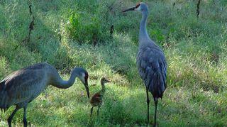 , Wildlife in my yard