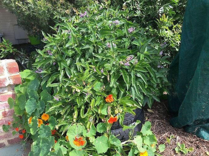 how to create a wicking garden from tyres, container gardening, gardening, how to