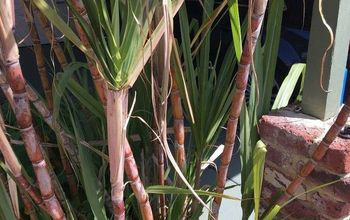 how to make cane syrup from sugarcane, how to