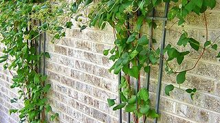 , Along with the small tree consider a trellis infront of the blank brick wall There are all types of Clematis you could plant there depending on your area sunlight etc There are some hardy ones and evergreen ones