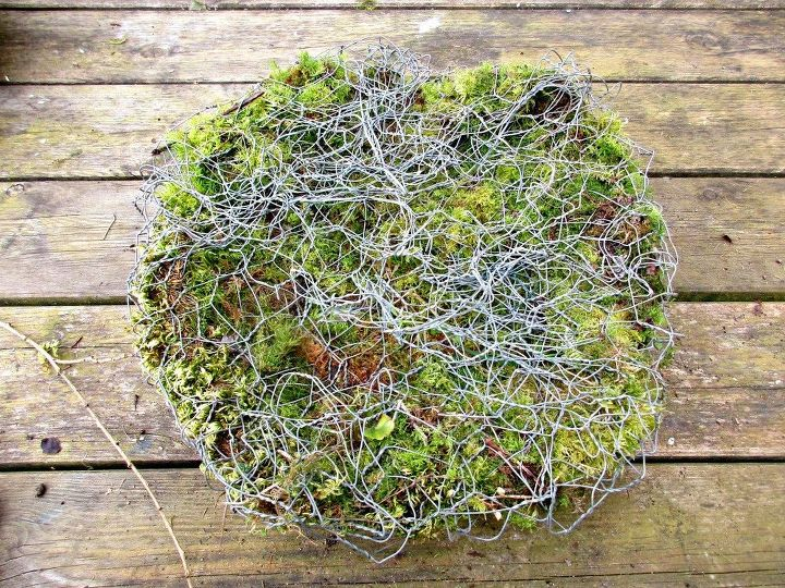 chicken wire and moss toadstool living sculpture, flowers, gardening, outdoor living, repurposing upcycling, succulents