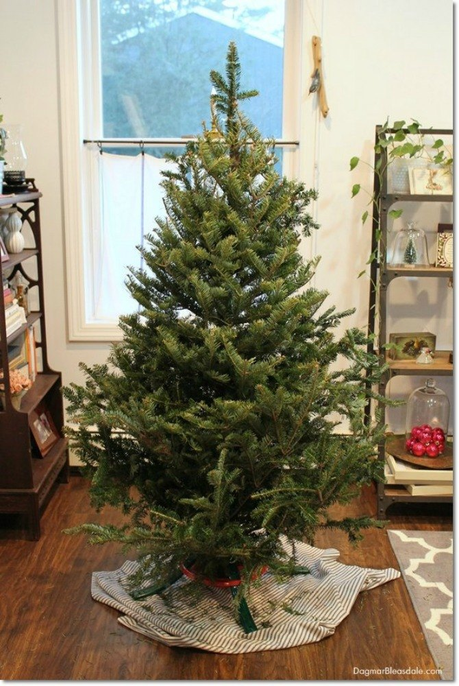 Solution Fill In Gaps With Real Branches You Ll Make Your Tree Look Fuller