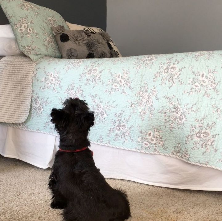 little doggy stairs hometalk