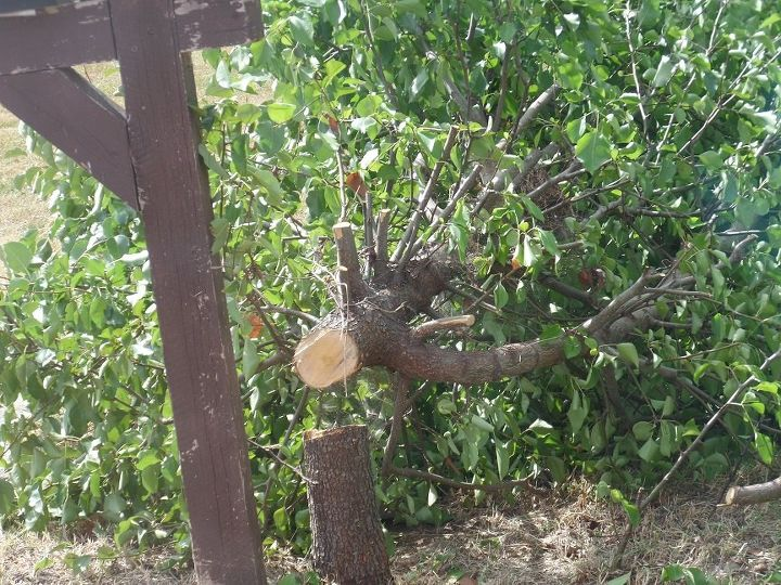q best way to kill bush tree after being cut down , gardening, landscape