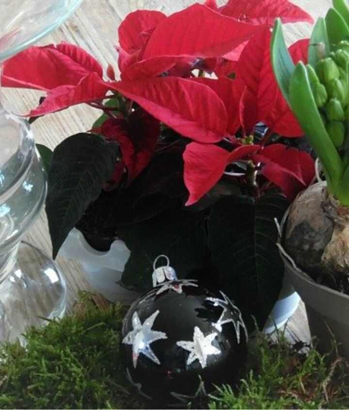 christmas plant arrangement, gardening
