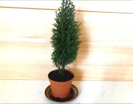 decorating a mini christmas tree cute diy tiny ornaments by fluffy christmas decorations seasonal - Tiny Christmas Tree