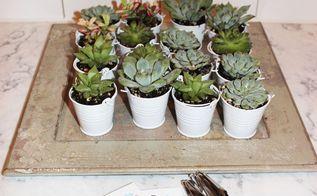 succulent party favors, flowers, gardening, succulents