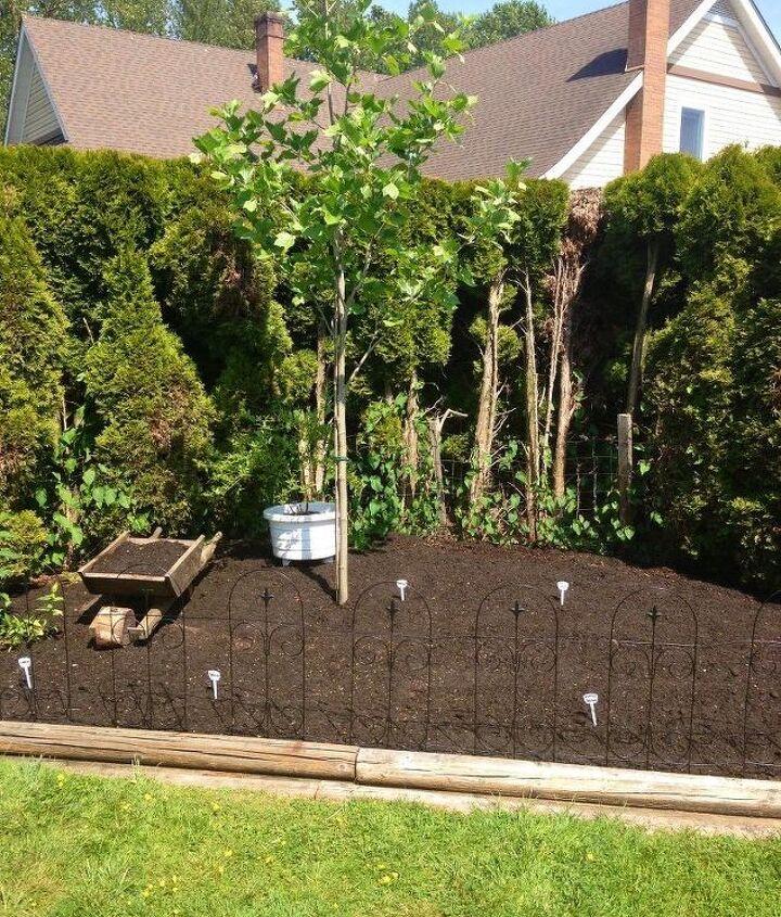 Back corner garden