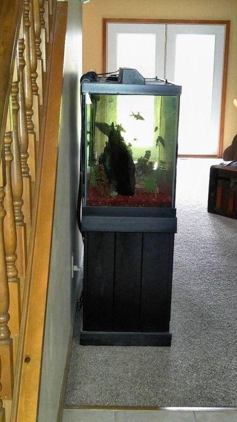 q painting behind an aquarium