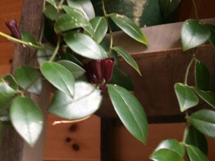 q what is the name of this plant, gardening