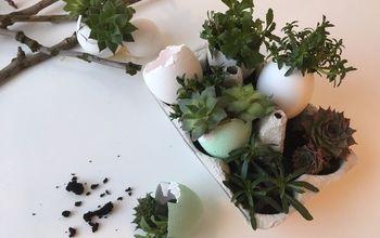 Eggshell Mini Succulent Garden