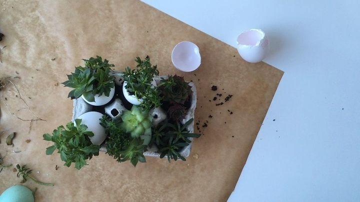 eggshell mini succulent garden, flowers, gardening, succulents