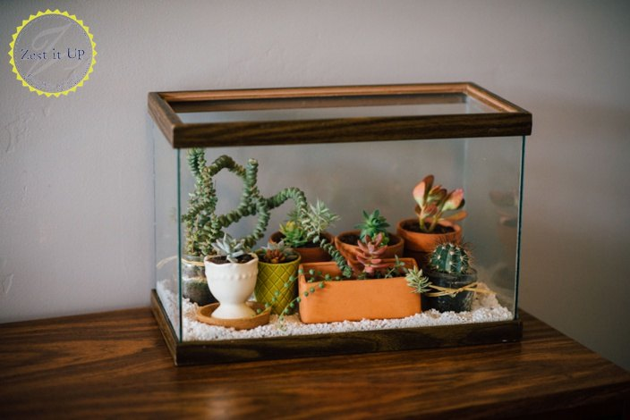Easy diy terrarium from an old fish tank hometalk for Fish tank terrarium