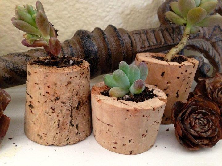 succulent corks, flowers, gardening, succulents