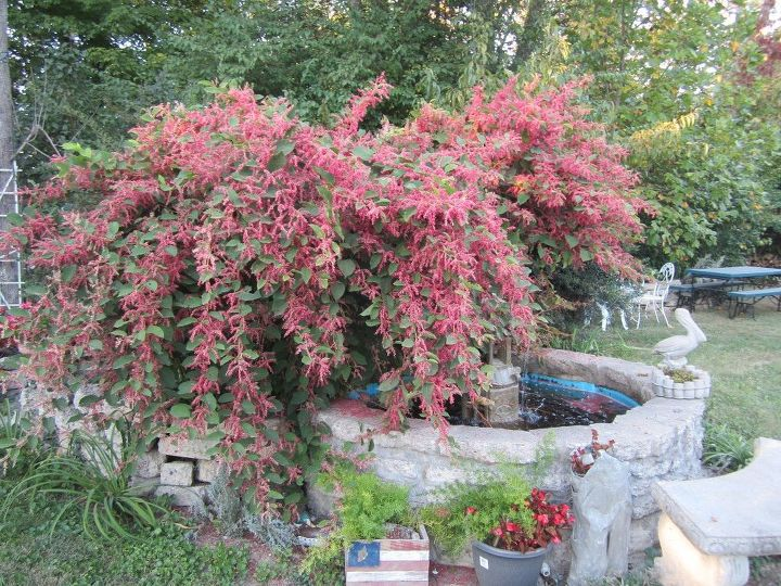 q gardening plant id, gardening