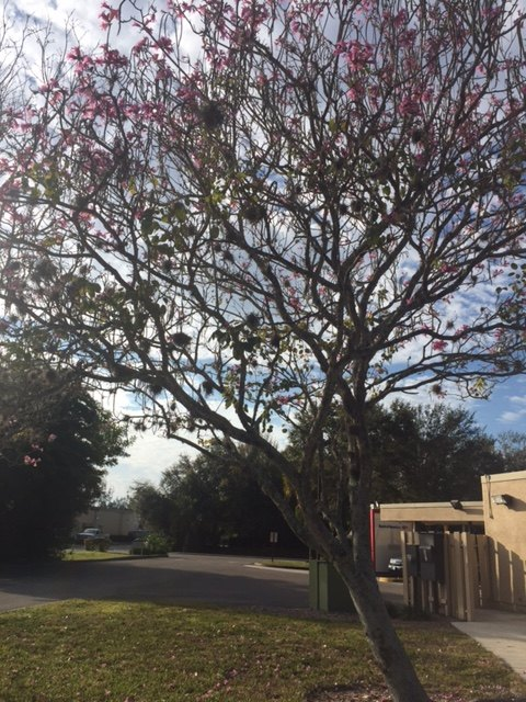 q please help identify this tree