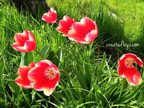 diy spring tulip wreath, crafts, wreaths