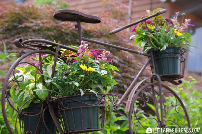 container gardening 101 tips and tricks to grow beautiful planters, container gardening, gardening