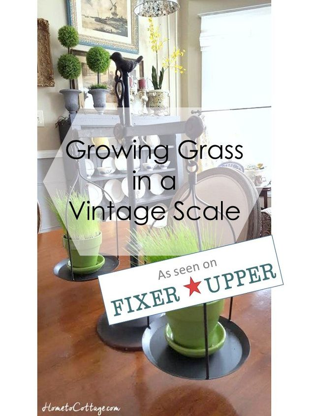 grow grass in a vintage looking scale, lawn care