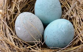 diy cement eggs tinted with colorant, concrete masonry