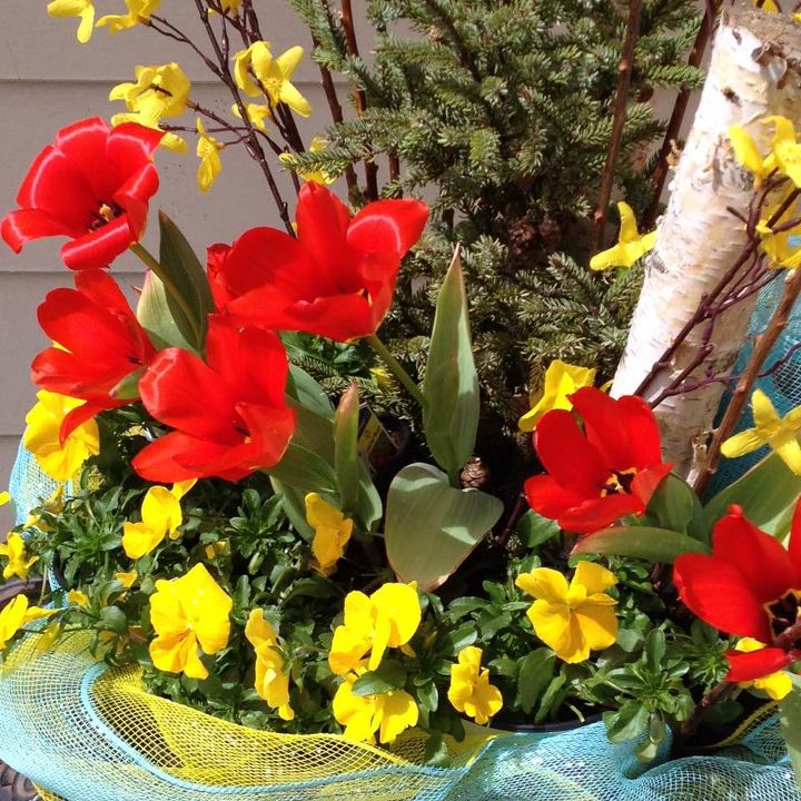 Red tulips and yellow pansies!