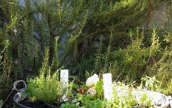 How to Set up Your Own Tiny Garden in 7 Easy Steps