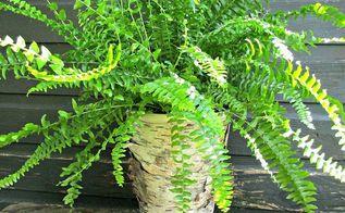 birch bark covered flowerpots, gardening, landscape