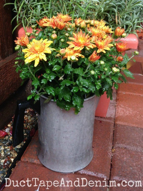 container gardening with vintage planters on a small patio, container gardening, gardening