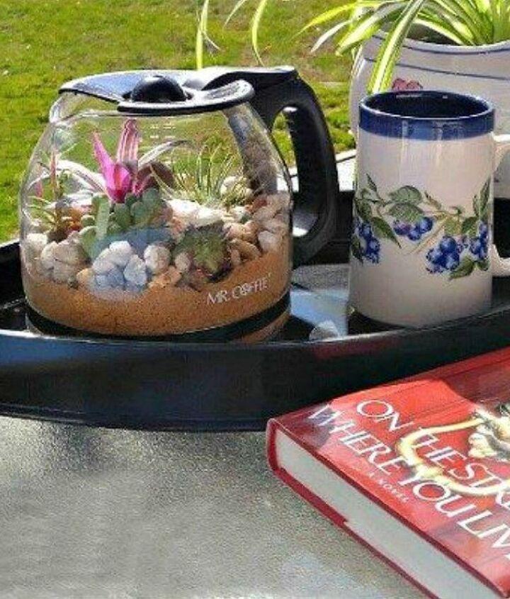 s 21 of the cutest terrariums we ve ever seen, gardening, terrarium, This coffee pot one