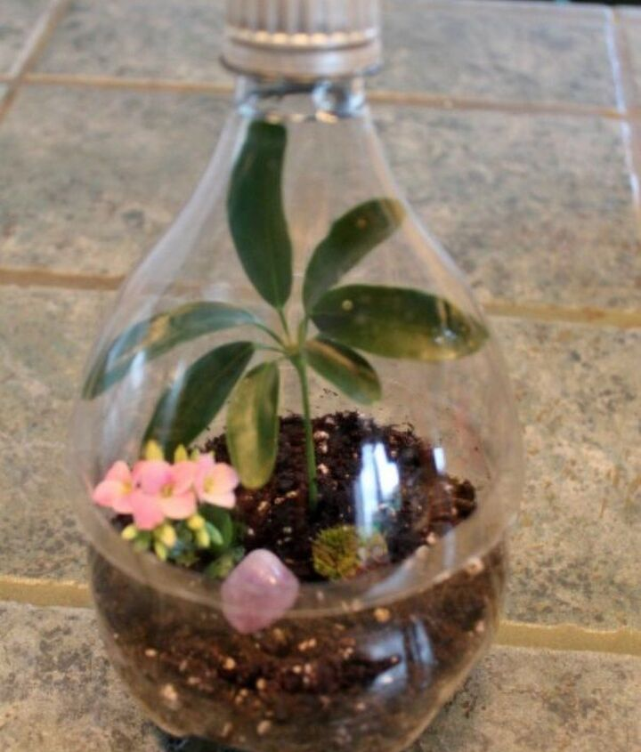 s 21 of the cutest terrariums we ve ever seen, gardening, terrarium, This easy one made from a coke bottle