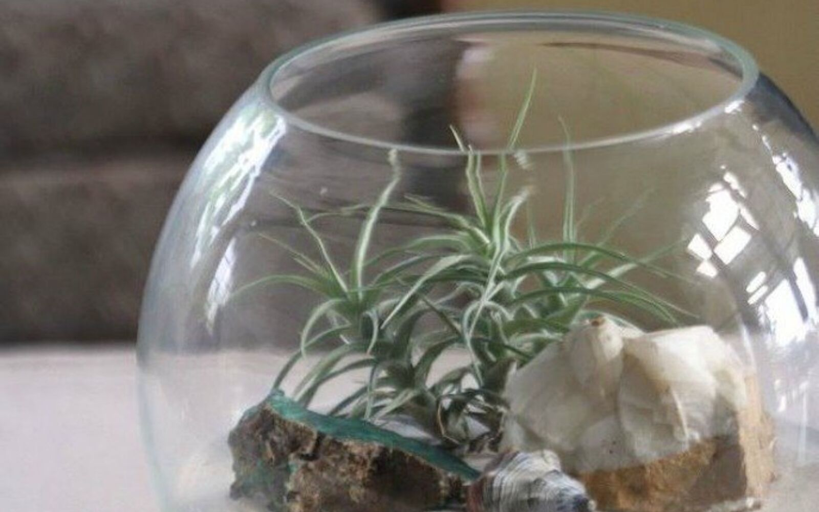 s 21 of the cutest terrariums we ve ever seen, gardening, terrarium, This beach vibe one