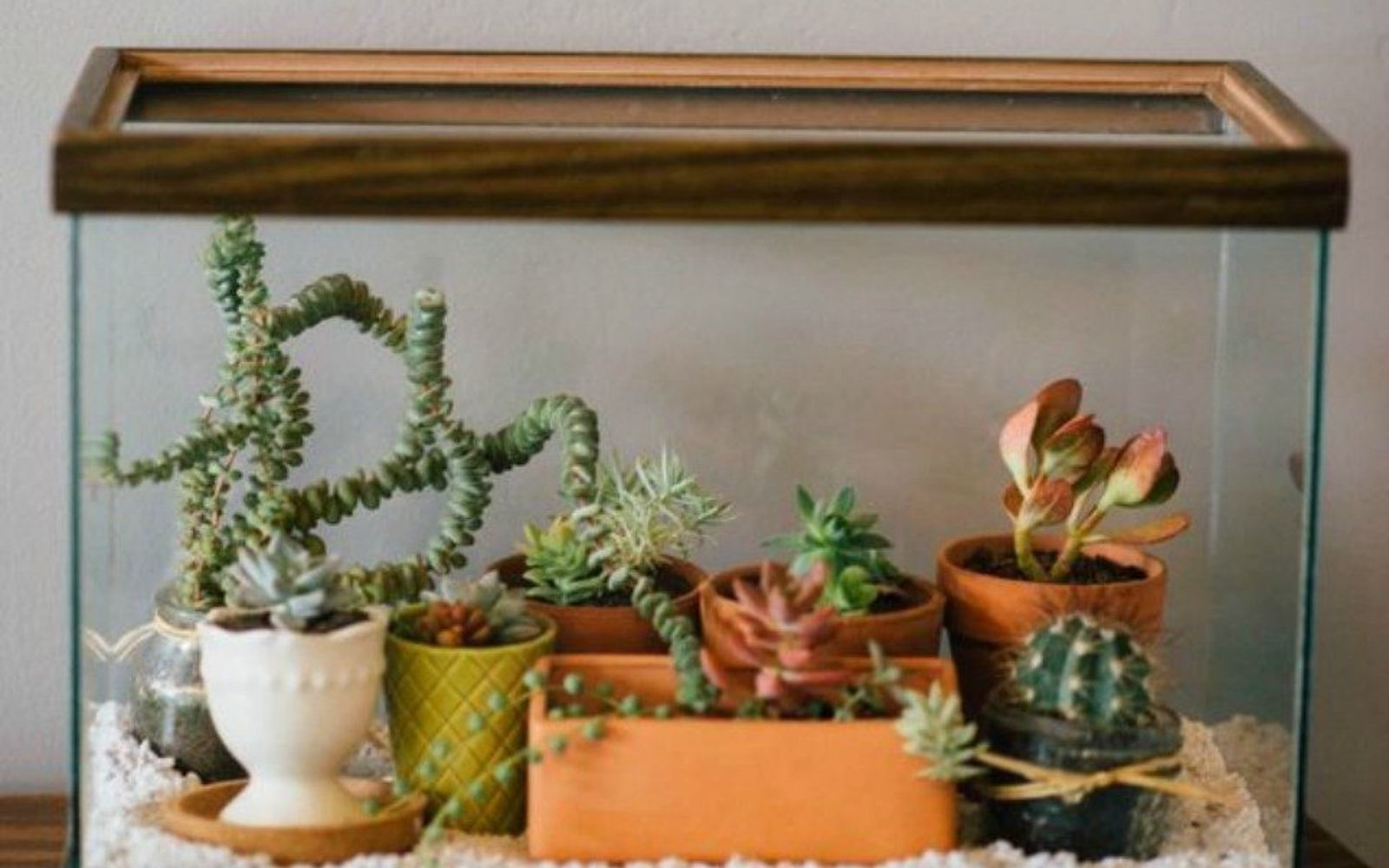 s 21 of the cutest terrariums we ve ever seen, gardening, terrarium, This aquarium turned terrarium one
