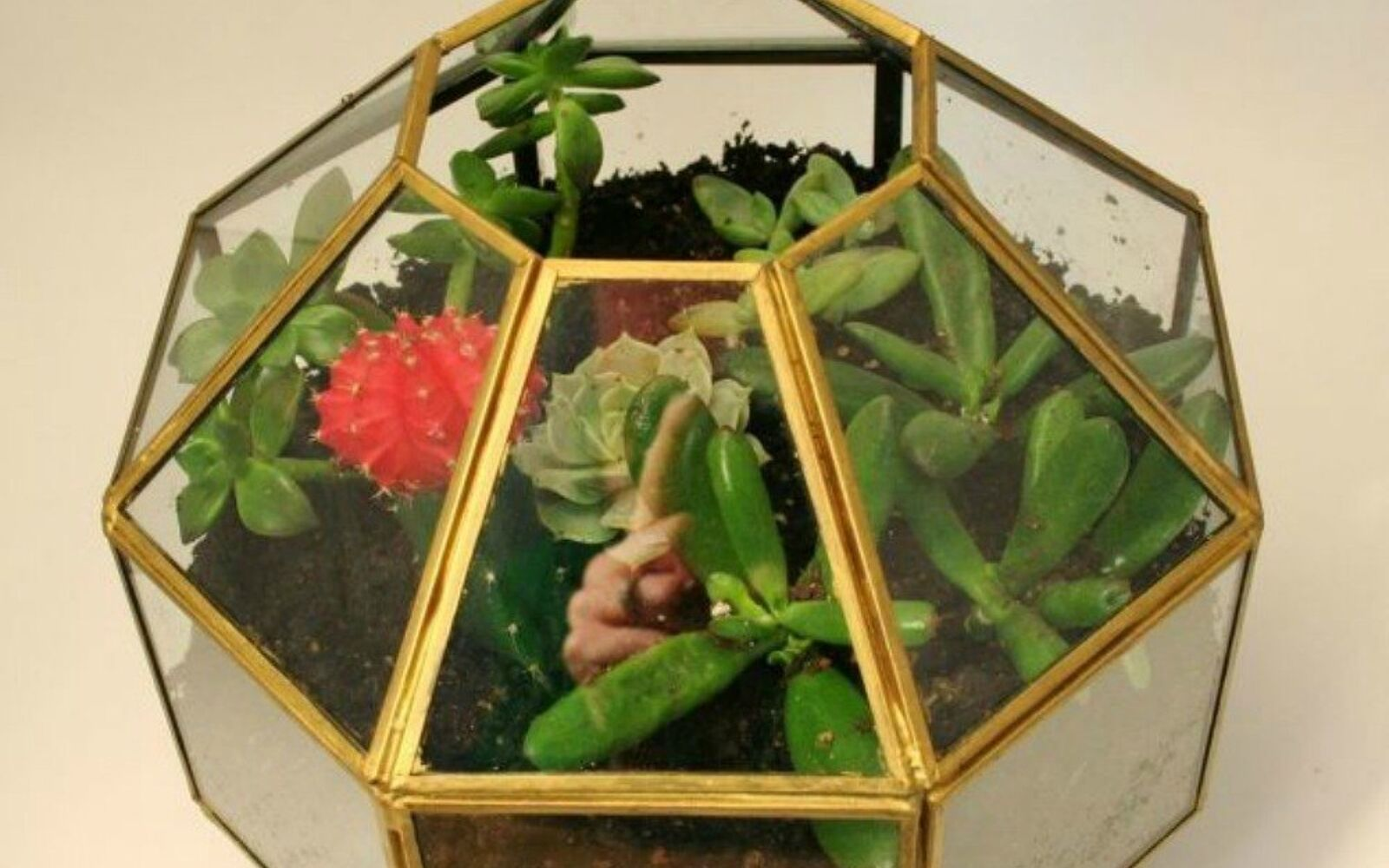 s 21 of the cutest terrariums we ve ever seen, gardening, terrarium, This one that used to be a pendant light