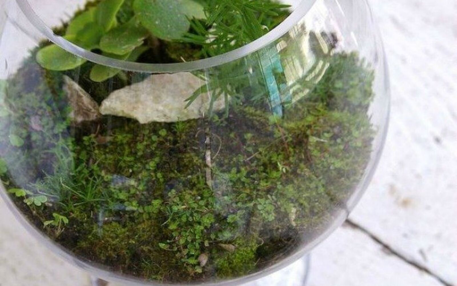s 21 of the cutest terrariums we ve ever seen, gardening, terrarium, This one made in a punch bowl and glass