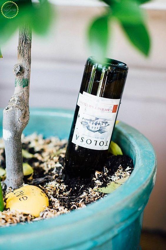 diy wine bottle waterer for potted plants, gardening