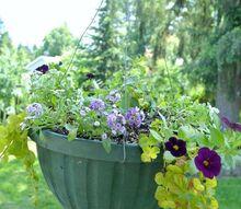 colorful flower planter ideas for sun, gardening