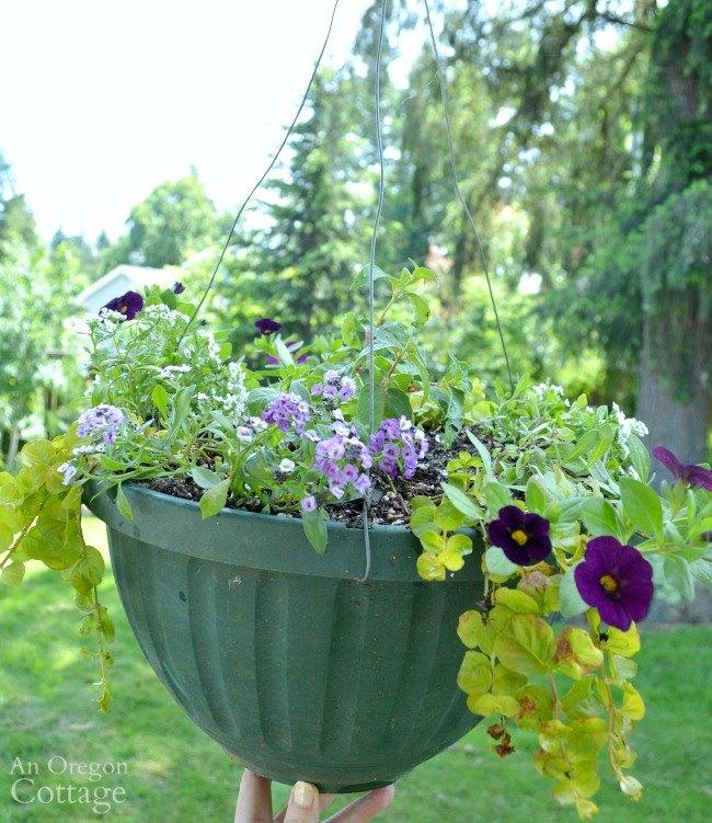 Colorful Flower Planter Ideas For Sun Hometalk