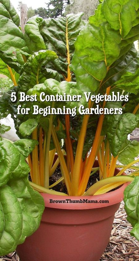 5 best container vegetables for beginning gardeners hometalk. Black Bedroom Furniture Sets. Home Design Ideas