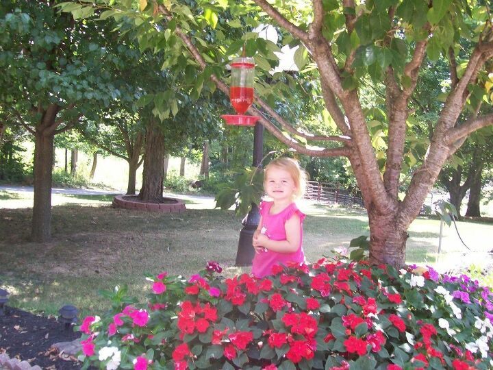e beautiful summer flowers