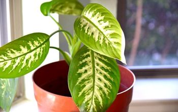 how to clean indoor houseplants and shine the leaves