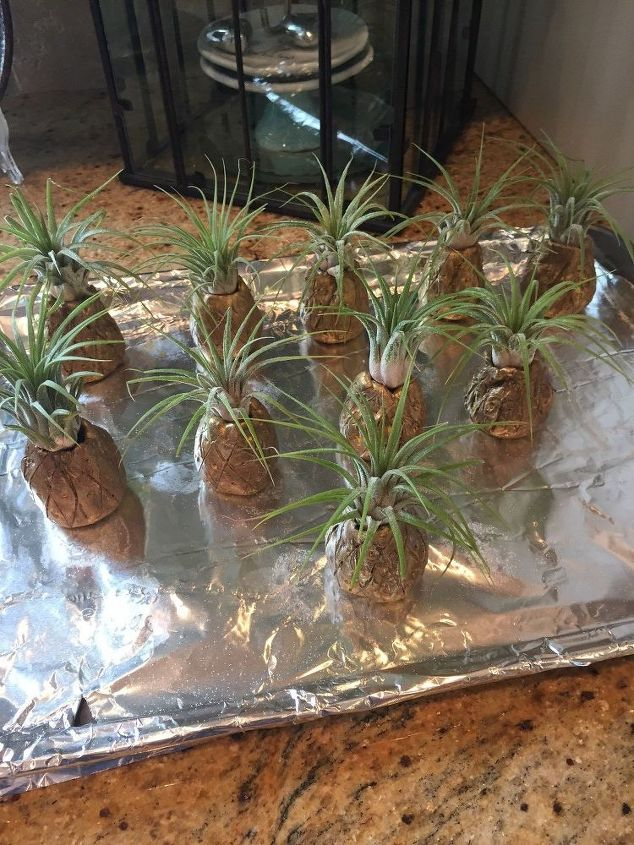 10 little air plant pineapples