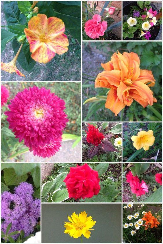 e our garden flowers 2016