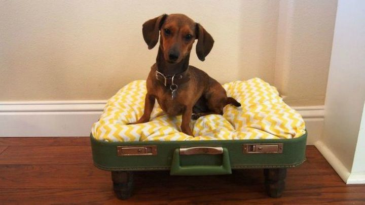 s don t throw out your old suitcase before you see these 15 clever ideas, Turn it into a comfy bed for your pet