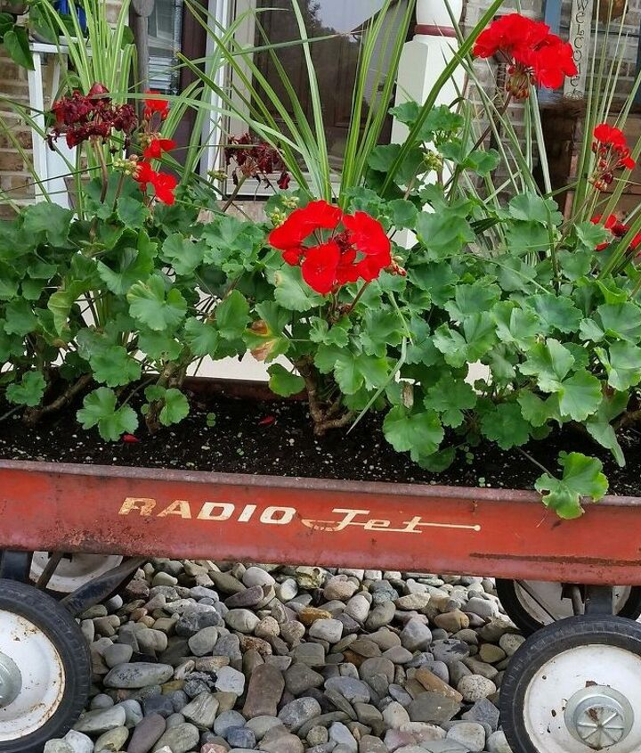 Only Geraniums the following year