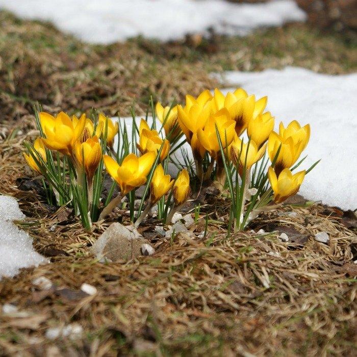 My Top 20 Favorite Early Spring Bloomers Hometalk
