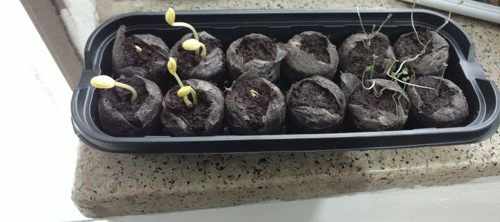 q need advice for my sprouting plants