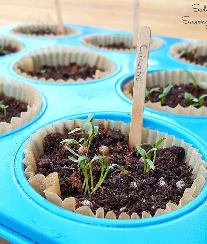 muffin pan herb starter pots