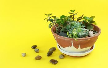 how to make a miniature succulent garden